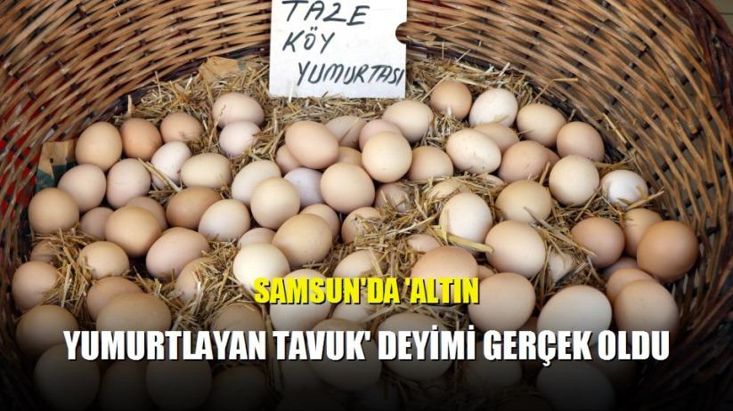 Samsun'da 'Altın yumurtlayan tavuk' deyimi gerçek oldu