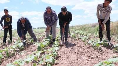Başkan Koçak: 'Tarım işçileri olmazsa tarım olmaz'