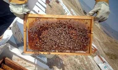 Arıcıları önce kuraklık sonra bilinçsiz kullanılan tarım ilaçları vurdu