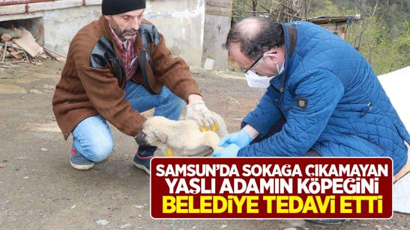 Samsun'da sokağa çıkmayan yaşlı adamın köpeğini belediye tedavi etti