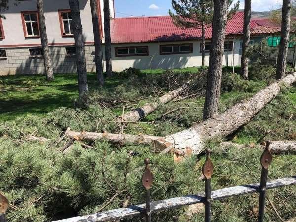 Dallarına konan kuşlar yere pisliyor diye ağaçları kestiler