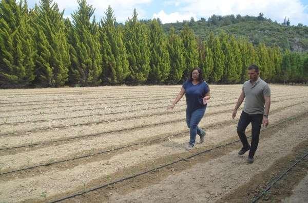 Kuşadası Belediyesi yerli fidelerle üretime başladı