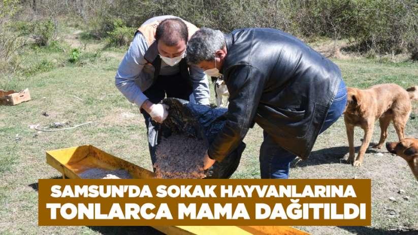 Samsun'da sokak hayvanlarına tonlarca mama dağıtıldı