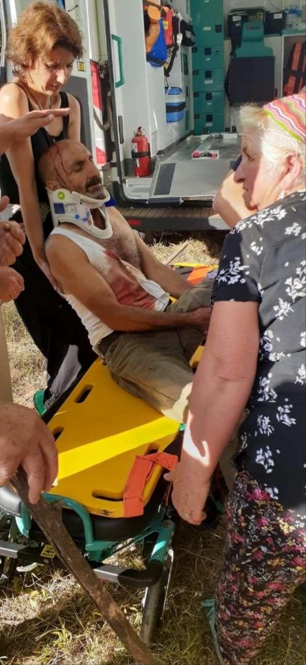 Tunceli'de ayı saldırısında bir kişi yaralandı