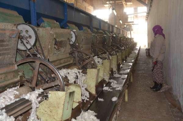 Çırçır fabrikasında 'beyaz altın' mesaisi