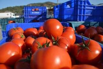 İstanbul'un Kasım ayı zam şampiyonu domates oldu