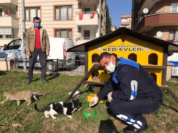 Amasya Belediyesi sokak hayvanları ve kuşlar için mama ile yem dağıttı