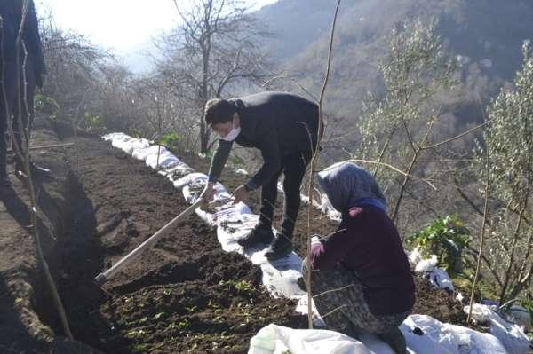 Trabzonda ilk kez dikimi yapıldı