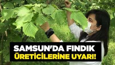 Samsun'da fındık üreticilerine uyarı!