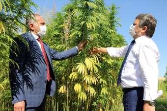 Yozgat Bozok Üniversitesi, endüstriyel keneviri üretip ekonomiye kazandıracak