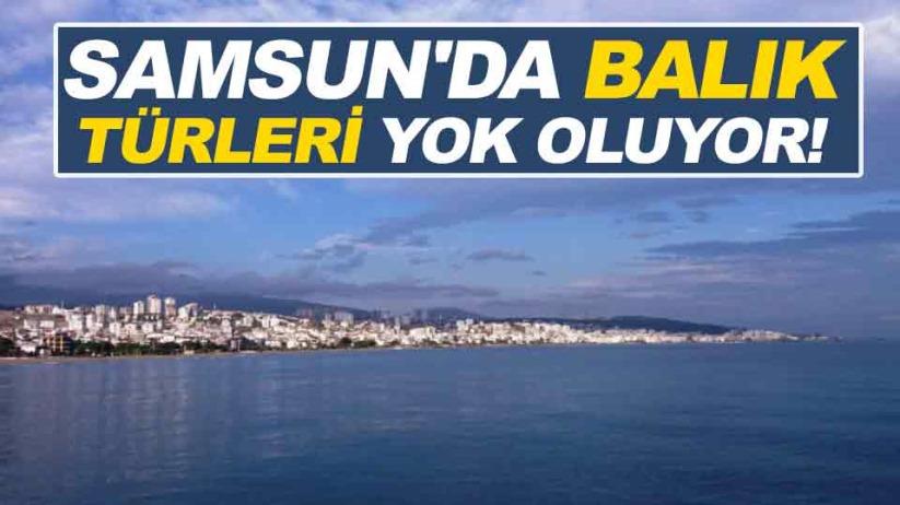Samsun'da balık türleri yok oluyor!