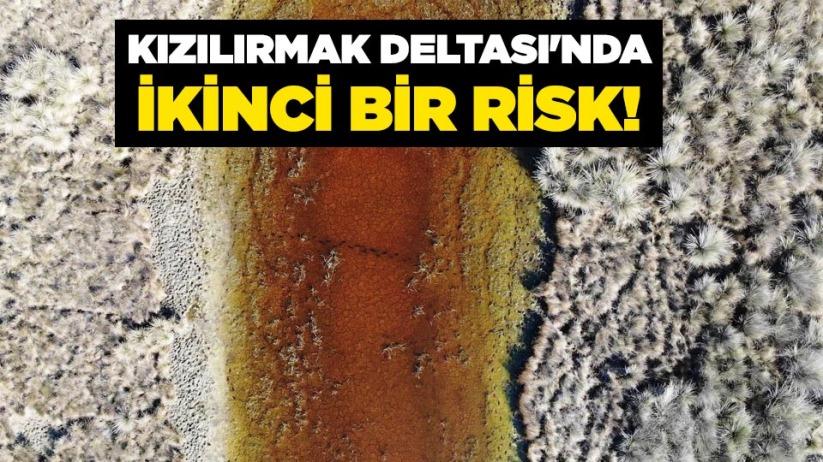 Kızılırmak Deltasında ikinci bir risk!