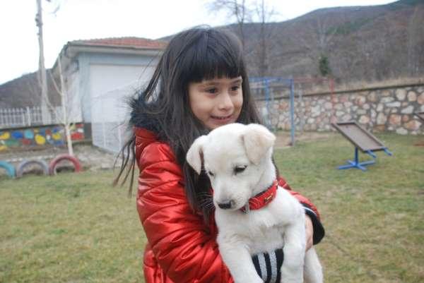 Okullar terkedilmiş köpeklerin yuvası oldu