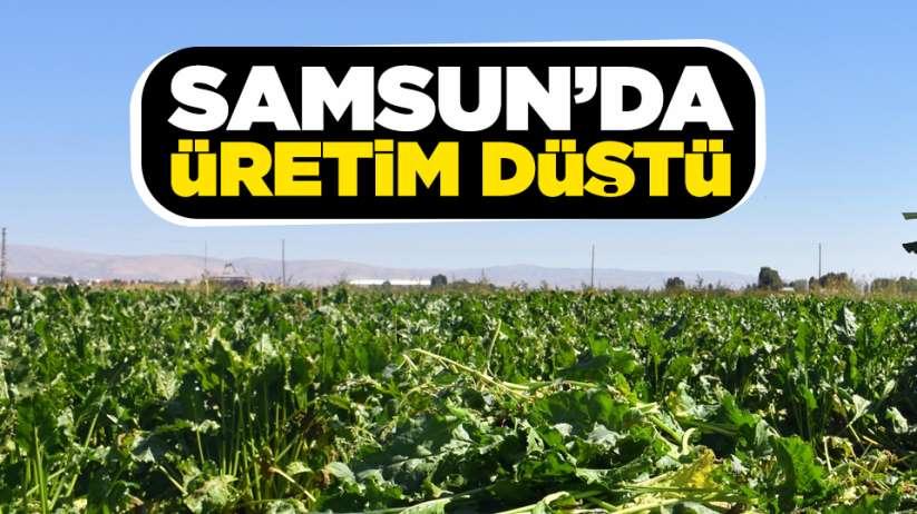 Samsun'da üretim düştü!