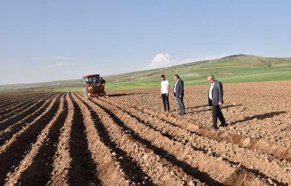 Ahlat'ta 50 bin dekar alanda patates ekimi yapılıyor