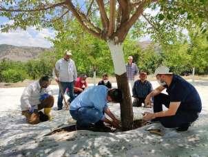 Dut bahçeleri incelendi, üreticiler hasat öncesi bilgilendirildi