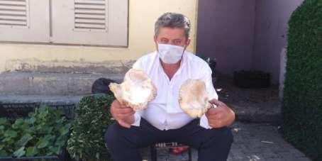Mereto Dağında topladıkları mantarları satarak geçimini sağlıyor