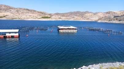 Malatya'dan 11 ülkeye balık ihracatı