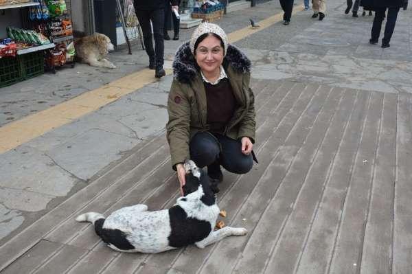 Soğuk kış aylarında sokak köpeklerine destek oluyor