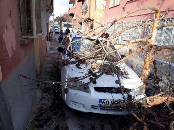 Tokat'ta aracın üzerine ağaç devrildi