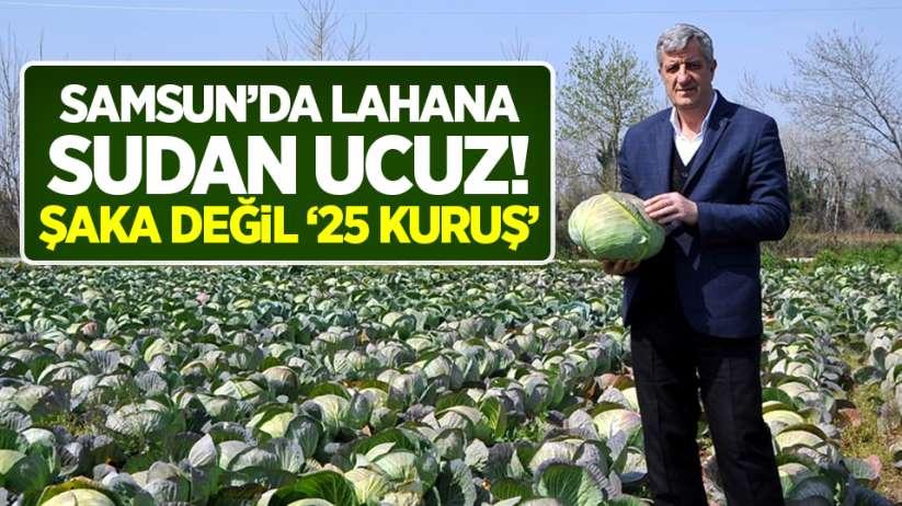 Samsun'da hasat bekleyen lahana sudan ucuz!