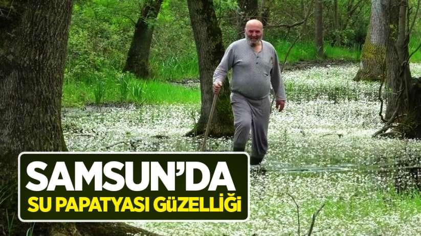 Samsun'da 'su papatyası' güzelliği