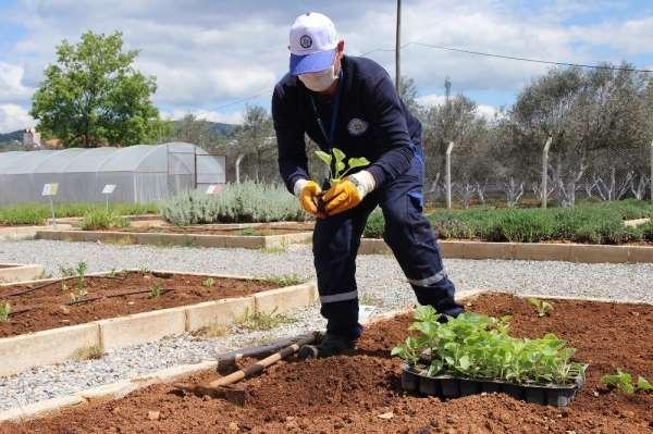 Yerel tohumlar toprakla buluşuyor