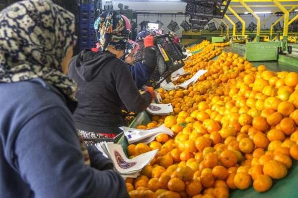 2019'da gıda ve tarımda öne çıkanlar