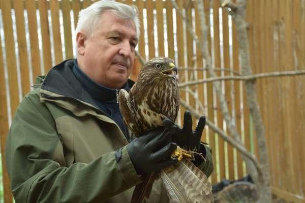 Tedavileri tamamlanan güvercin ve şahin doğaya salındı