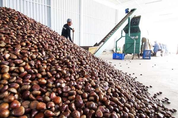 Yaş meyve sebze ihracatçılarının 2020 hedefi 1 milyar dolar ihracat