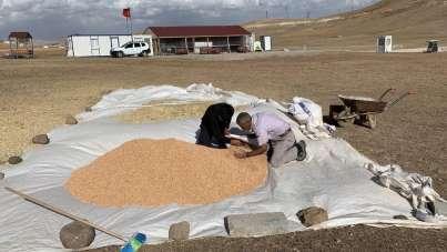 Proje kapsamında ekilen nohut ve fasulyenin hasadı tamamlandı