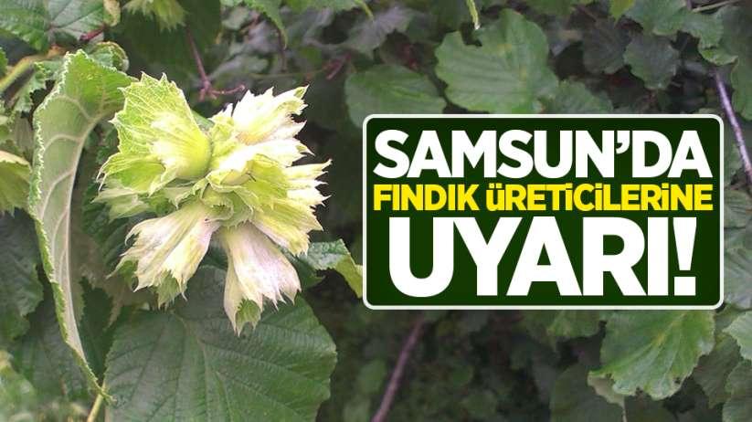 Samsun'da fındık üreticilerine uyarı