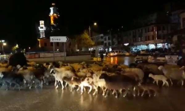 Şehir merkezinden koyun sürüsü geçti