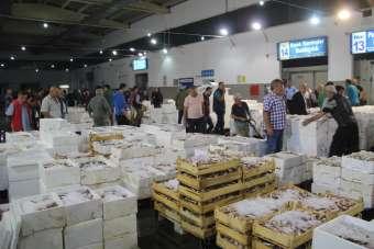 10 bin ton balık işlem gördü, en fazla hamsi tüketildi