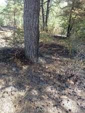 Taşova'da yangında 5 hektarlık orman zarar gördü