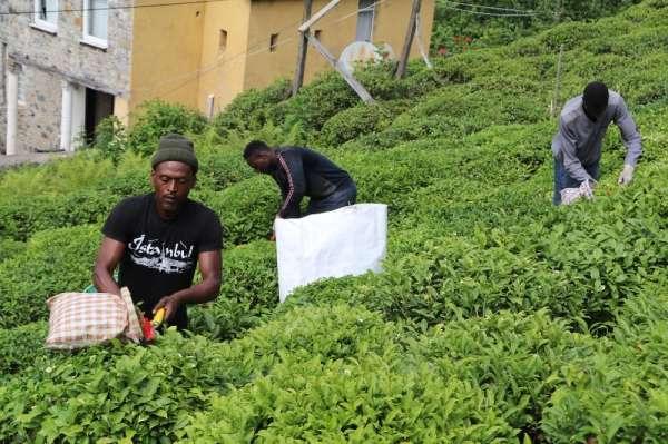 Çay bahçeleri Birleşmiş Milletler gibi