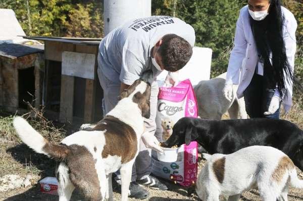Atakum Belediyesi'nin patili dostlara mama desteği 5 tonu aştı