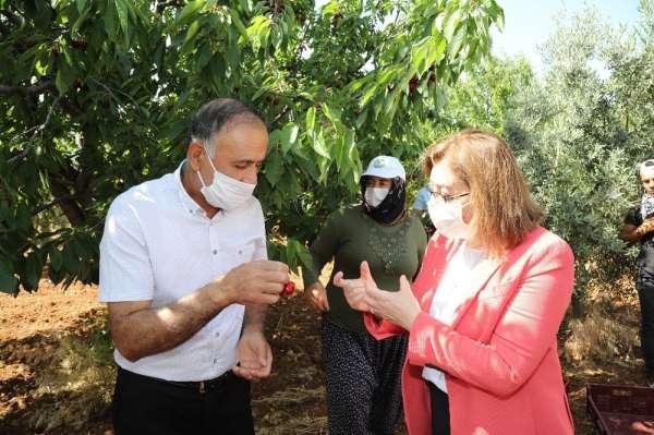 Başkan Fatma Şahin kiraz bahçelerini ziyaret etti