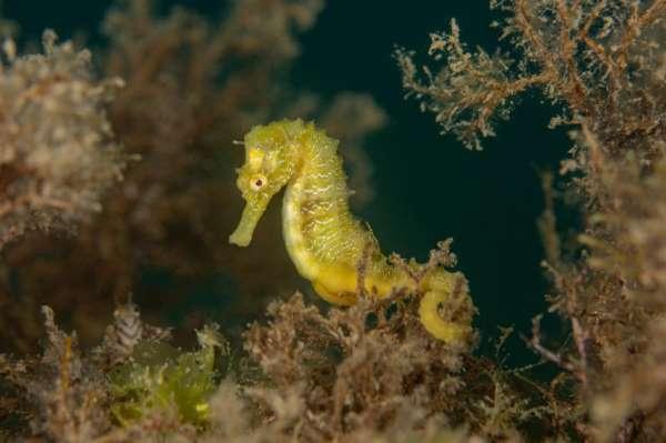 Ordu'da deniz canlıları böyle görüntülendi