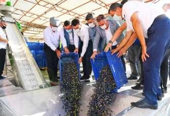 Kumluca'da ilk zeytinyağı sıkımı gerçekleştirildi