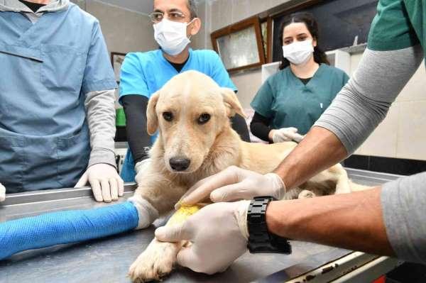 Samsunda 2 bin 83 hayvanın tedavisi yapıldı