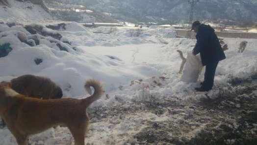 Reşadiye Belediyesi sokak hayvanlarını unutmadı