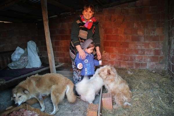 40 yıllık hayvan sevgisini evinin bahçesine taşıdı