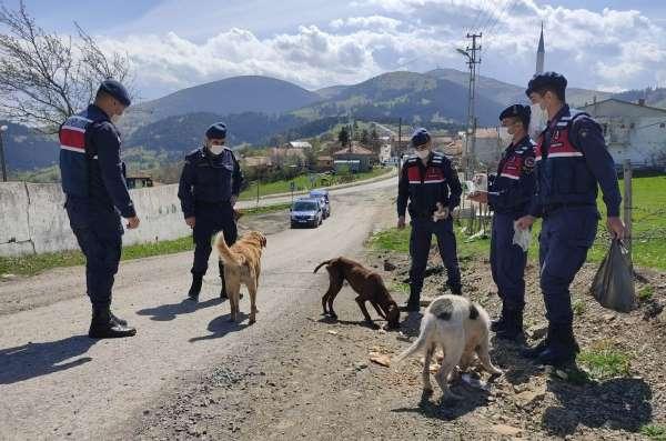 Aç kalan sokak hayvanlarını jandarma besliyor