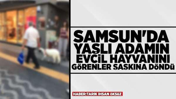 Samsun'da Evcil Koyununu Gezdiren Adam Görenleri Şaşırttı