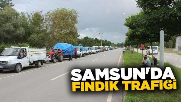 Samsun'da fındık trafiği