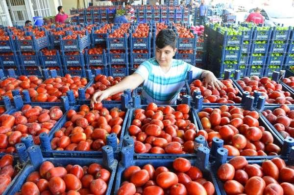 Tonlarca domates kabzımalların elinde kaldı