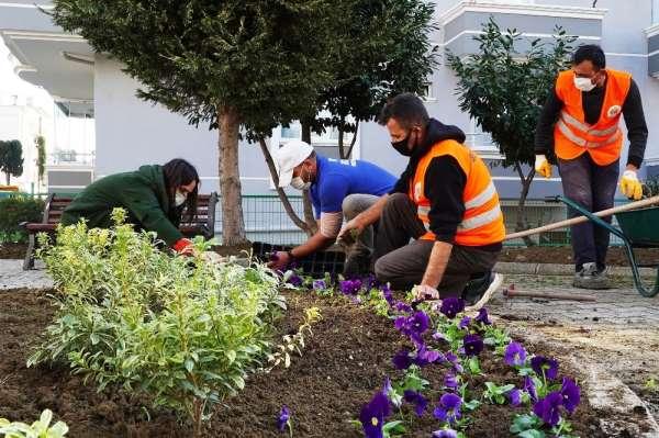 Atakum Belediyesi kendi serasında 200 bin çiçek ve çalı üretti