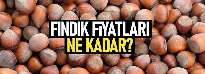 Samsun'da fındık fiyatları ne kadar 13 Haziran Pazar fındık fiyatları