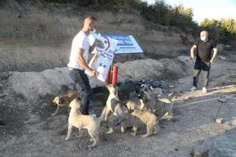 İlkadım Belediyesi sokak hayvanlarına destek olmaya devam ediyor